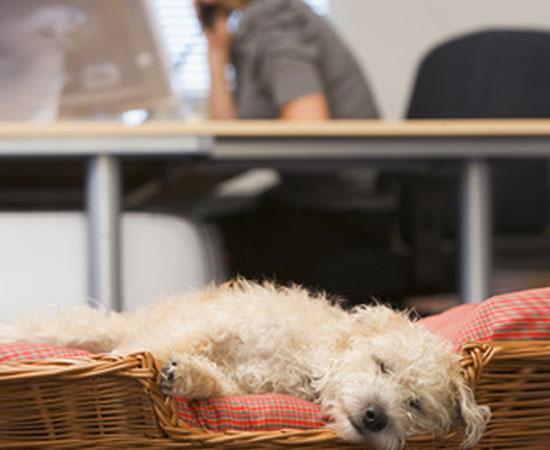Hund schläft in Körpchen, hinter ihm Büro-Alltag