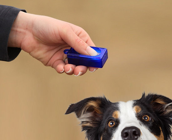 Karen Pryor I Click Dog Training Clicker