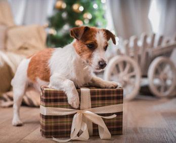 Hund Weihnachtsgeschenke