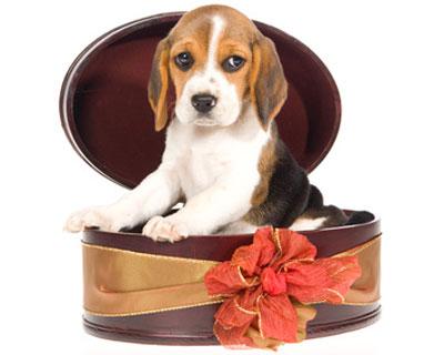 trauriger Hund in Geschenk-Box