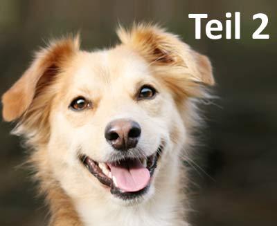 Fachbeitrag Lerntheorie Hund - Teil 2