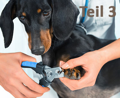 Medical Training - Teil 3, Hundeportal