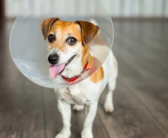 Tierversicherung für meinen Hund