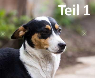 Verhaltenstherapie beim Hund Teil 1 - Fachbeitrags Titelbild