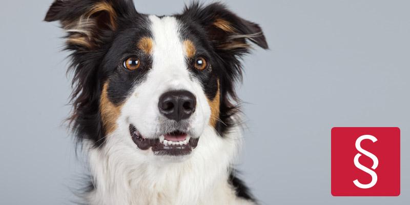 Hübscher Hund vertritt die Rechte der Hunde