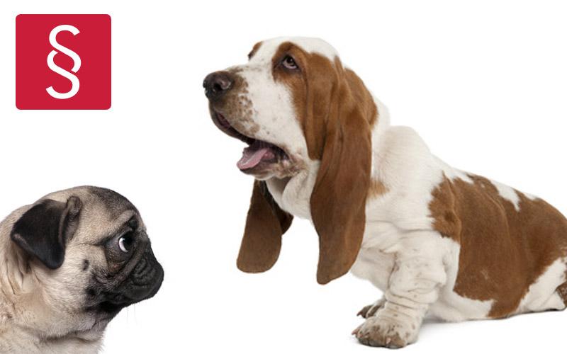 Beispielbild: Basset Hound und Mops Qualzuchten