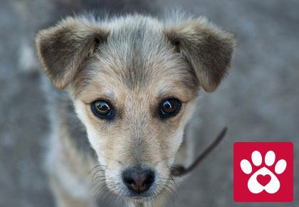 Welttierschutztag Symbolbild
