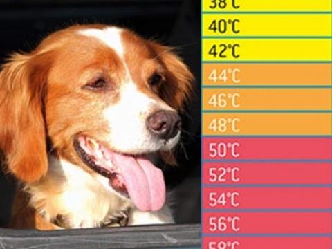 Hund in der Hitzefalle Auto - Lebensgefahr!