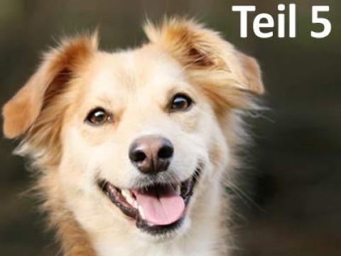 Lerntheorie Hund - Fachbeitrag Teil 5