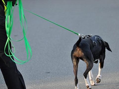 Mantrailing - natürliche Auslastung für den Hund
